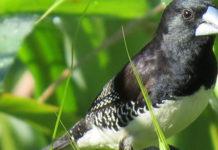 Birding-in-semiliki