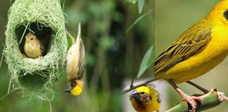 beautiful-birds
