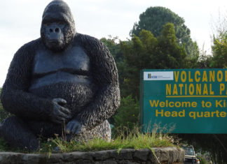 gorilla-trekking-in-Volcanoes-national-park