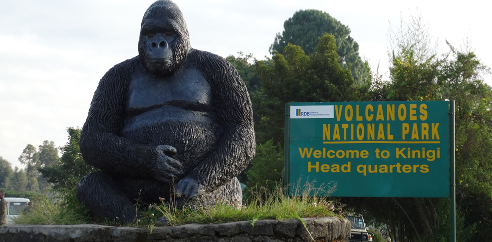 gorilla-trekking-in-Volcanoes-national-park
