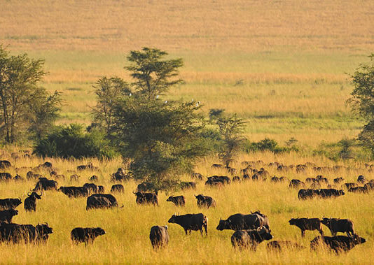 Tips to Travel to Uganda