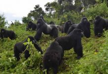 Uganda safari activities