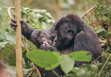 Gorilla Trekking Guide