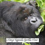 Uganda-Gorilla-Tours