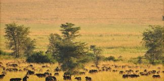 Top places to visit in Uganda