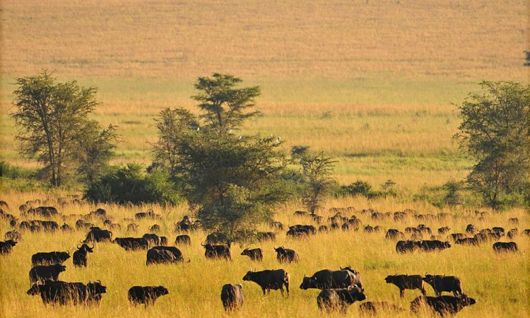 Top places to visit in Uganda