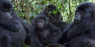 tourism remains open in uganda during lockdown