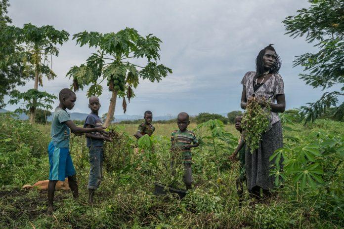 land problems in uganda