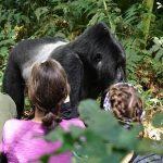 Trekking-gorillas-in-Volcanoes-NP
