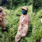 protecting-gorillas-during-covid-19-1-1024×633-1