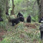 protecting-gorillas-from-covid-19-1024×683-1